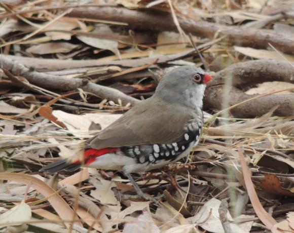 Birding at the Arboretum