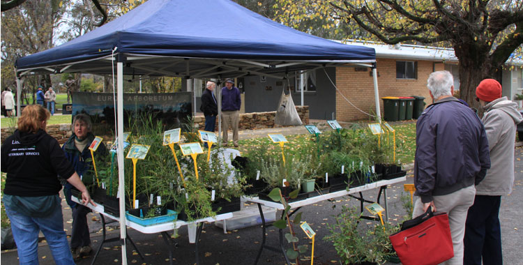 plant stall at euroa farmers market