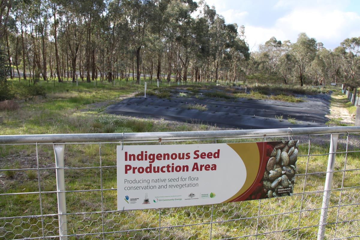 indigenous seed production area