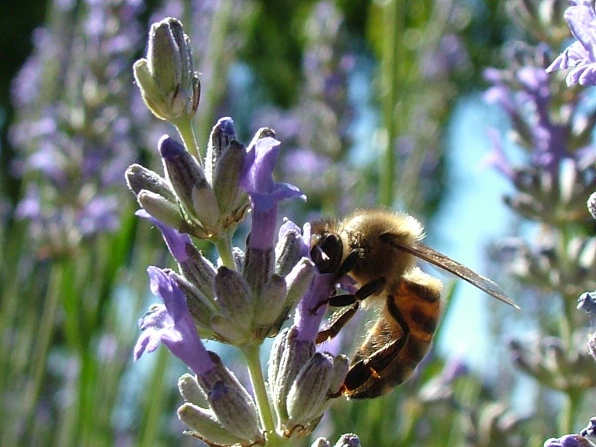 gardens_wildlife1
