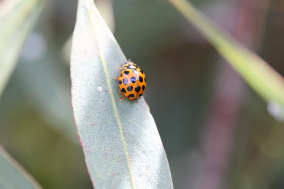 gardens_wildlife3