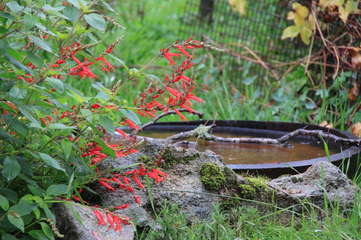 gardens_wildlife4